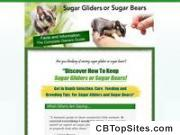 Sugar Gliders Or Sugar Bears As Pets - Facts And Information