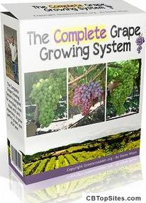 My Grape Vine - Learn How To Grow Grapes